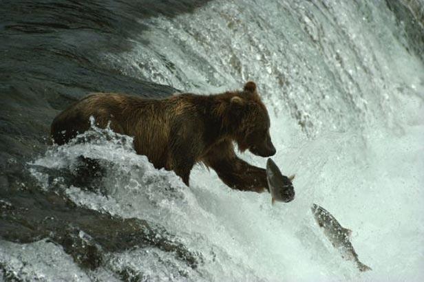 Mostra national geographic a ingresso libero blog per for Le migliori cabine per grandi orsi