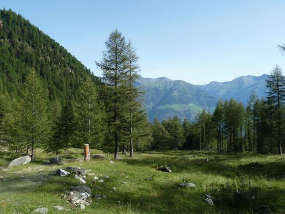 Boschi della Val Venosta