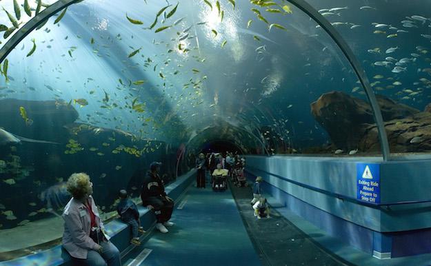 Qual 39 l 39 acquario pi grande del mondo blog per viaggiatori for Acquario per tartarughe grandi
