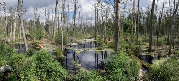 foresta bialowieza